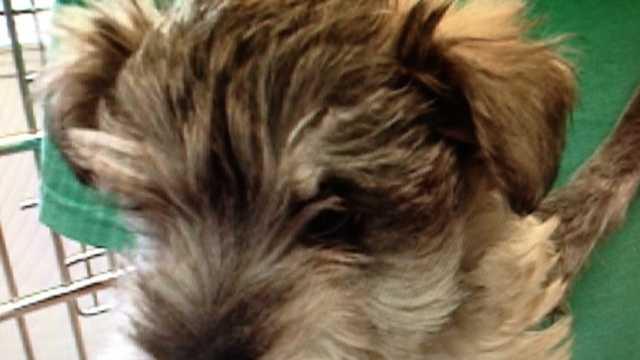 Puppy Mill pics sent to web folder 2