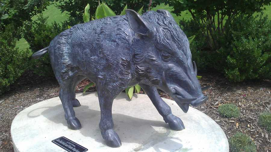 There are several razorback statues in The Gardens near the stadiums in Fayetteville.