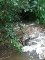 Puppy Creek