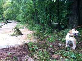 Little Sugar Creek, Avoca floods