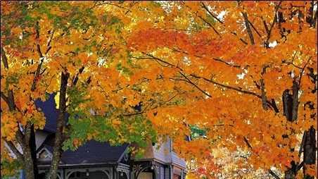 fall foliage report pic