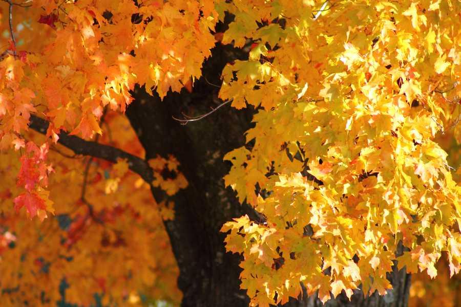 Breathtaking leaves in Centerton.