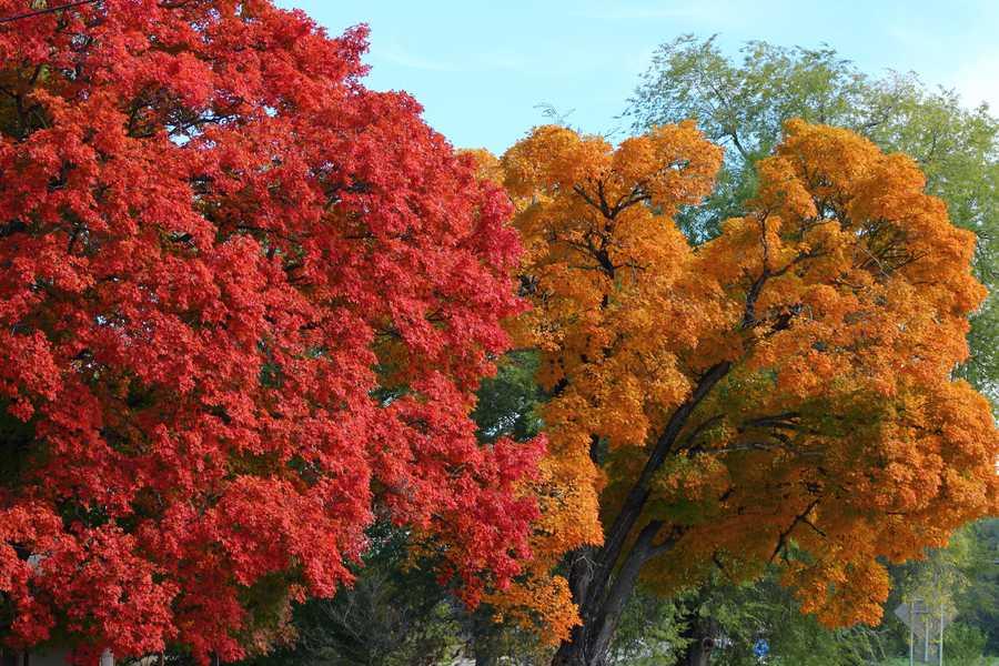 Fall colors in Centerton.
