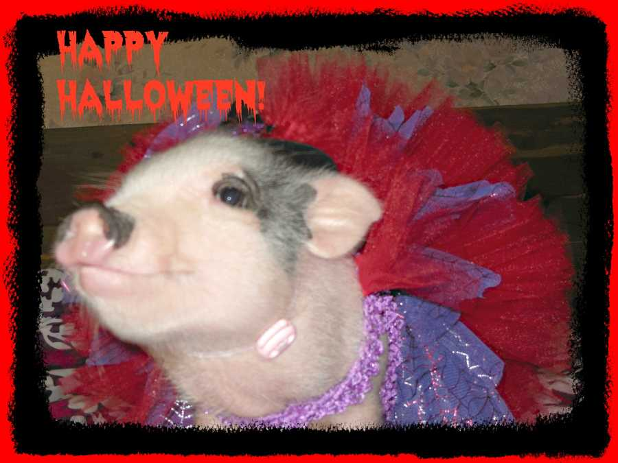 Miss Tulip wishing all the ghosts and Goblins safe and happy trick or treating!