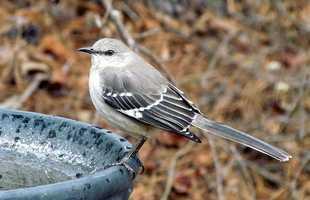 Apr. 26 - Arkansas Bird DayState Memorial Day