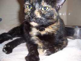 Hilda is a young tortoiseshell cat.