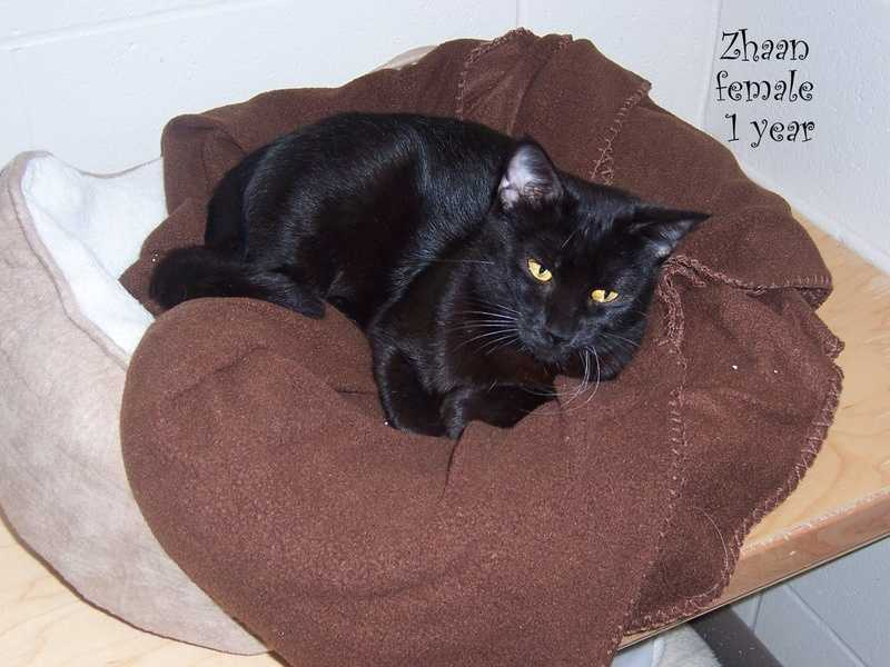 Zhaan is a young, house-trained cat looking for a nice place to snuggle.