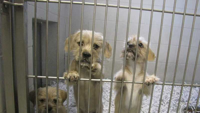 These pets are looking for a home. Click here to visit the Washington County Animal Shelter website and help!