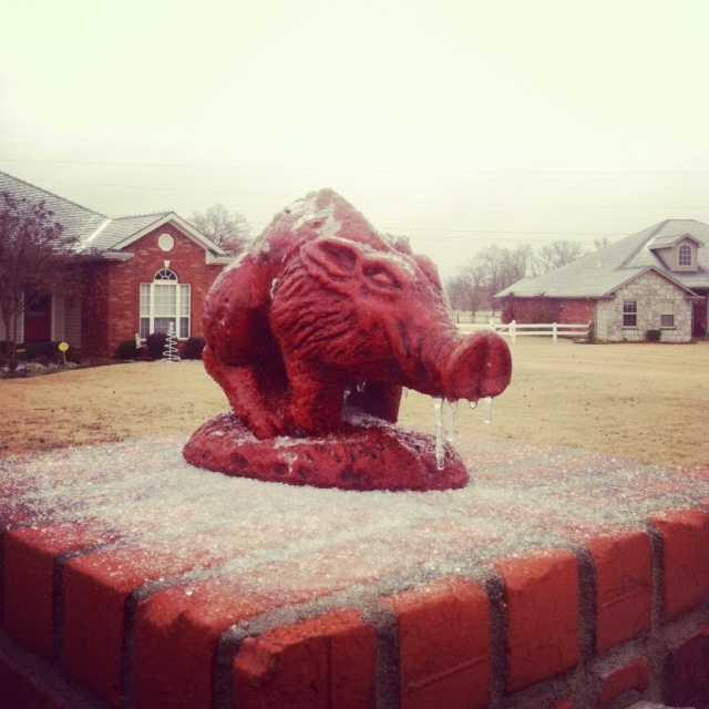 Frozen Razorback in Alma, Arkansas