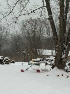 Red birds enjoyed the snow Sunday in Rogers.
