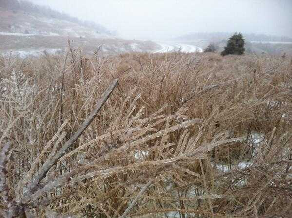 Icy buildup on grass in Winslow