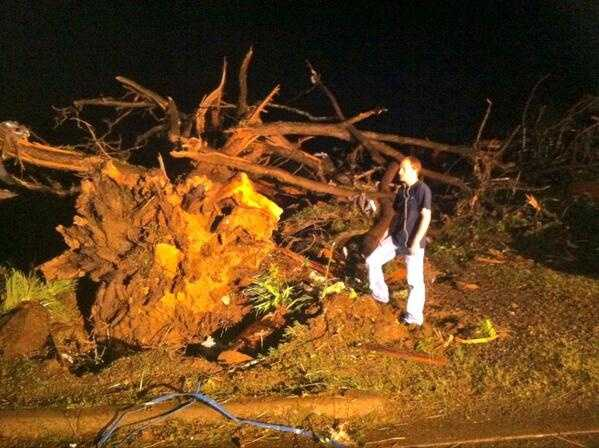Trees uprooted in Mayflower