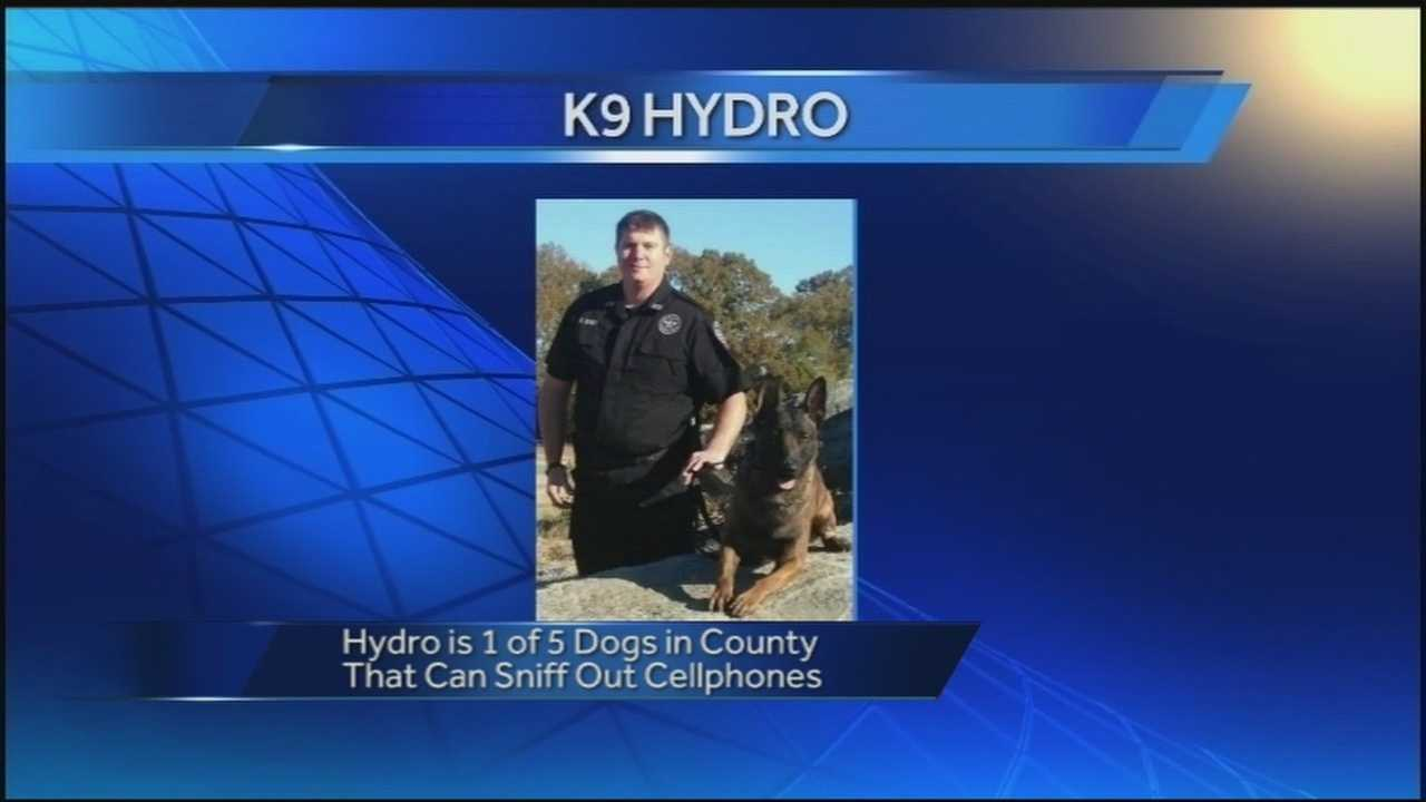 K-9 Hydro specializes in sniffing out smuggled cell phones for the Benton County Jail.
