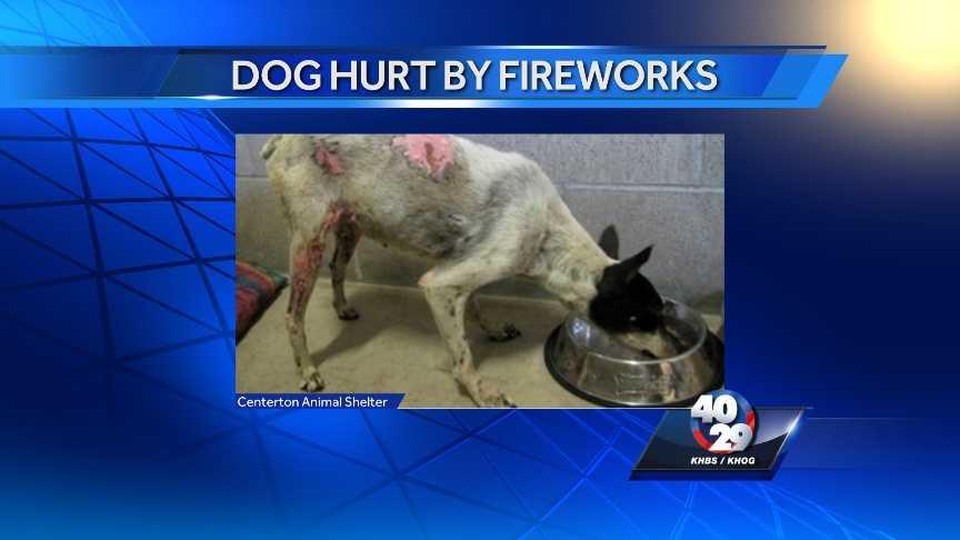 _dog hurt by fireworks_0120.jpg