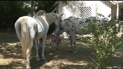 horses.jpg (1)
