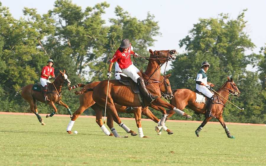 Polo:A polo pony will cost you $15,000 - $35,000, according to SportPolo.com. Club fees and equipment are thousands more.