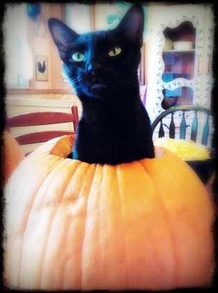 By Jascha_VanBrunt: The Great Pumpkin Cat.