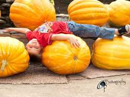 By Sweet_sun21: I was checking out a pumpkin stand and this little guys mom asked if I might take a few snap shots for her.  Here is her little boy enjoying the big pumpkins :)