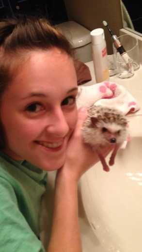 Mariana giving our pigmy hedgehog, Sir Lancelot a bath