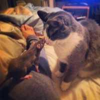 Roscoe Mortal Enemies or Best Friends??
