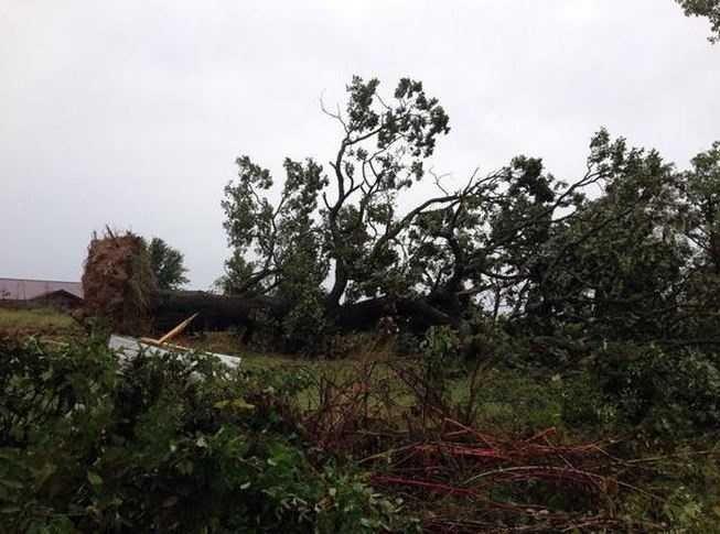 Lots of large trees knocked over as a result of the winds. This is a couple miles north of Hindsville.