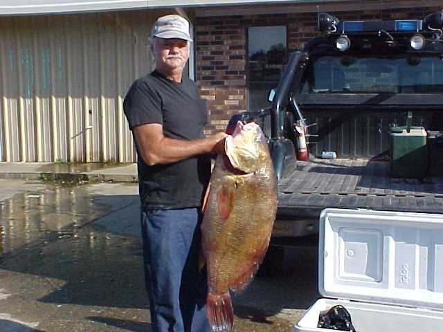 Chuck Piker caught this record 45-pound, 7-ounce Freshwater Drum in Lake Wilson in 2004.