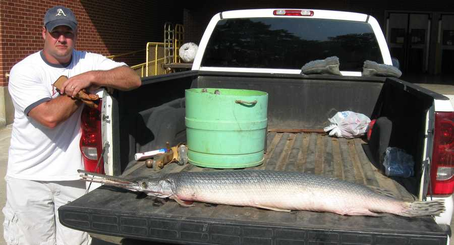 The unrestricted tackle Longnose Gar State Record is for this 54-pounder that Torry Cook caught in the Arkansas River in 2011.