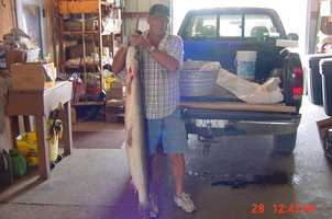 Tommy Cantrell caught the rod and reel record for Longnose Gar in Taylor Old River Lake in 2005. It weighed 35 pounds, 12 ounces.