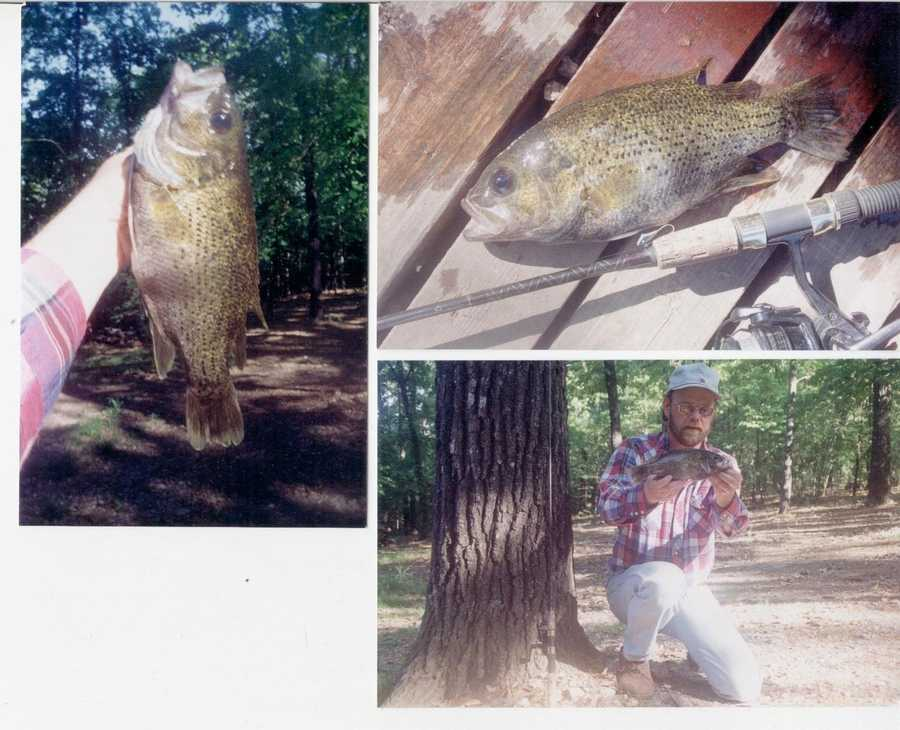 This Ozark Bass set not just the state record, but the world record as well. Gary Nelson caught it in Bull Shoals Lake in 1997.