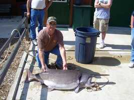 This Paddlefish weighed 102 pounds, 8 ounces! Michael Curran caught it at Beaver Lake in 2007.