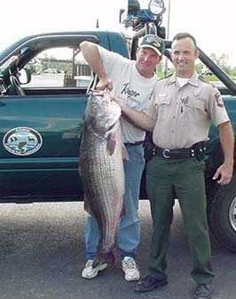 The record for Striped Bass is 64 pounds, 8 ounces. Jeff Fletcher caught it at Beaver Lake Tailwater in 2000.