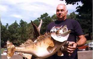 This Walleye is a 12-pound-line-class world record. It weighed 22 pounds, 11 ounces, and was caught by Al Nelson at Greers Ferry Lake in 1982.