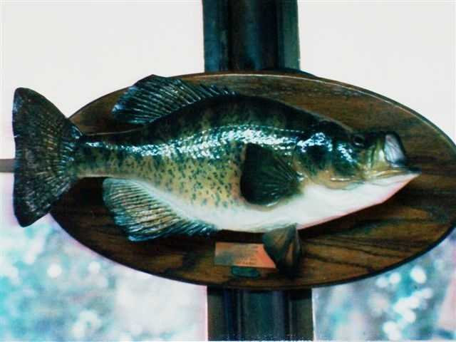 The White Crappie record was set at 4 pounds, 7 ounces in 1993. Shelby D. Cooper caught it in Mingo Creek.