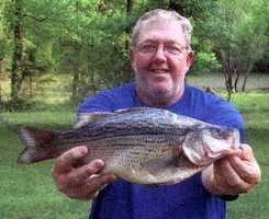 Tony Dinger caught this Yellow Bass on Gillham Lake in 2009. It weighed 2 pounds, 2 ounces.