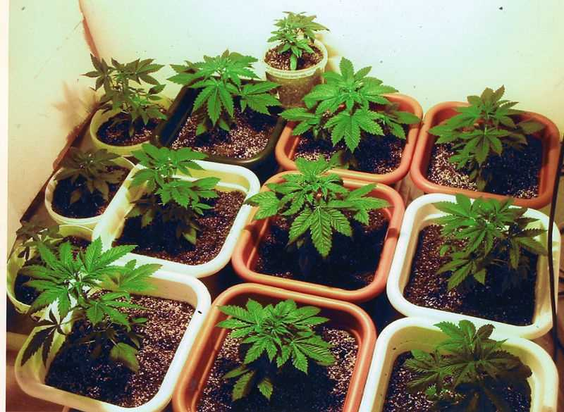 Arkansas arrests more people on possession of marijuana than of all other drugs combined.