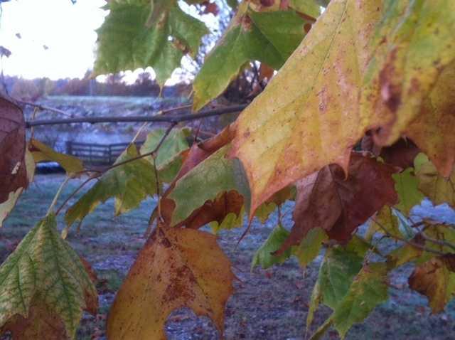 The frost in Fayetteville.