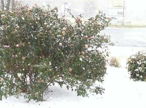 Snow near the Arkansas-Missouri border just after noon Sunday.