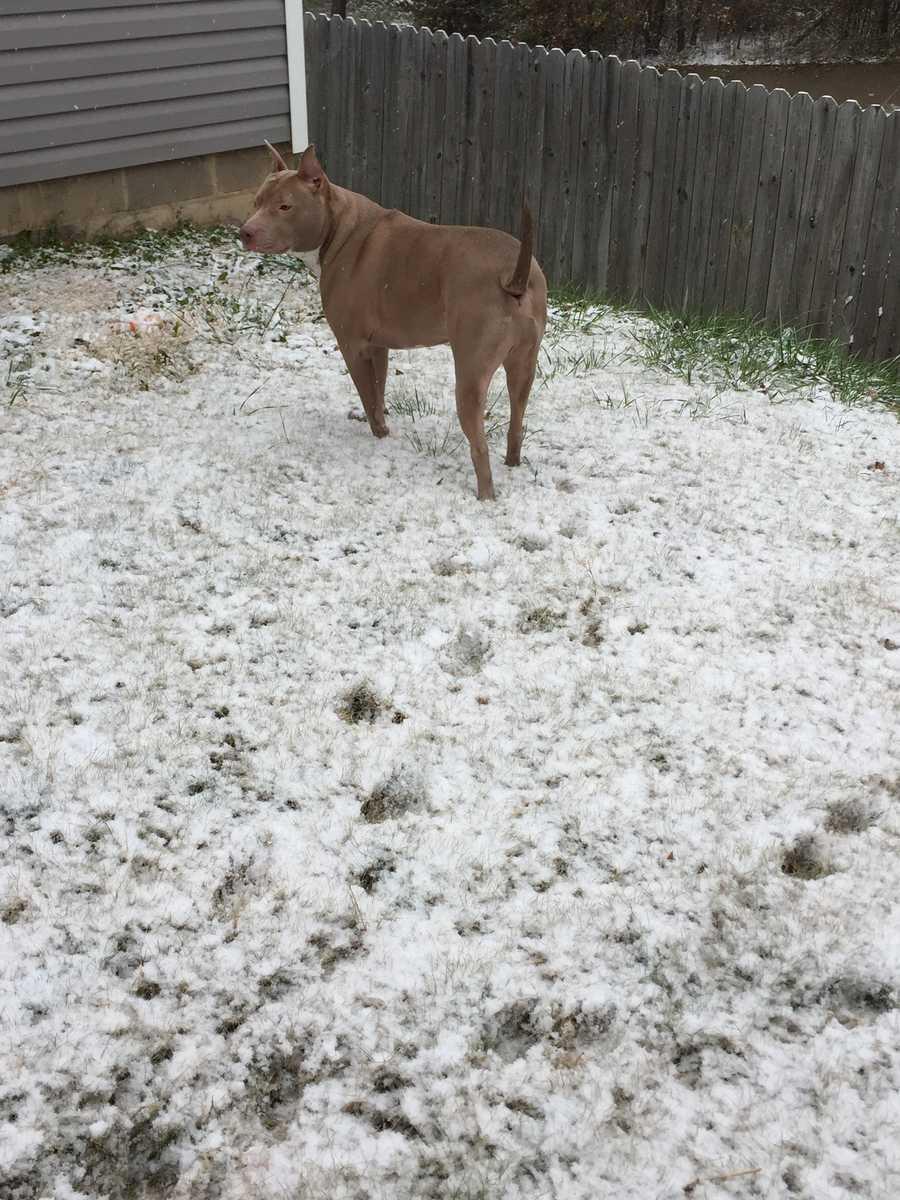Draic in the snow in Springdale