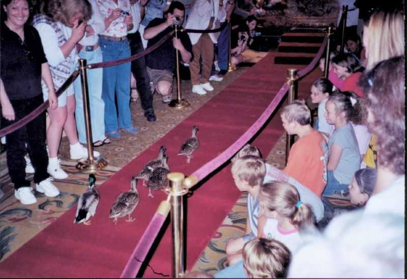 Stay at the Peabody Hotel. The hotel is famous for its ducks that march through the hotel every day at 11 a.m.