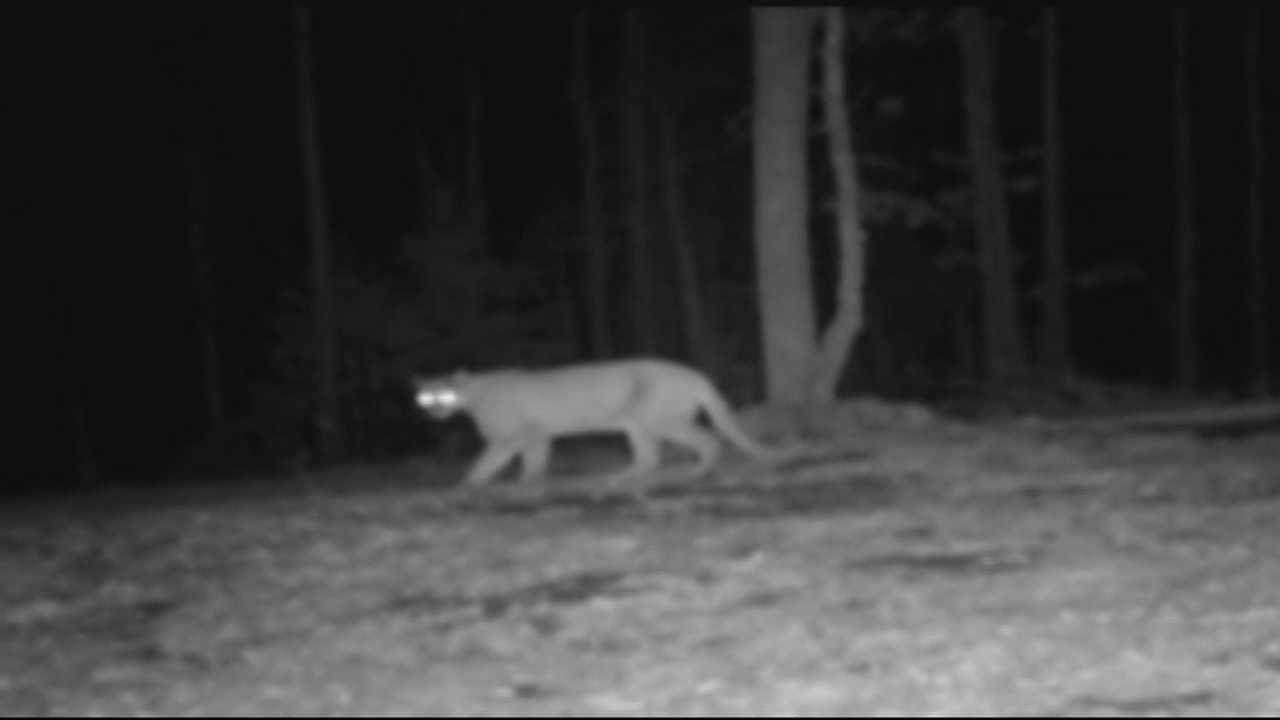 40/29 uncovers new evidence of confirmed sightings of the animal in our area.