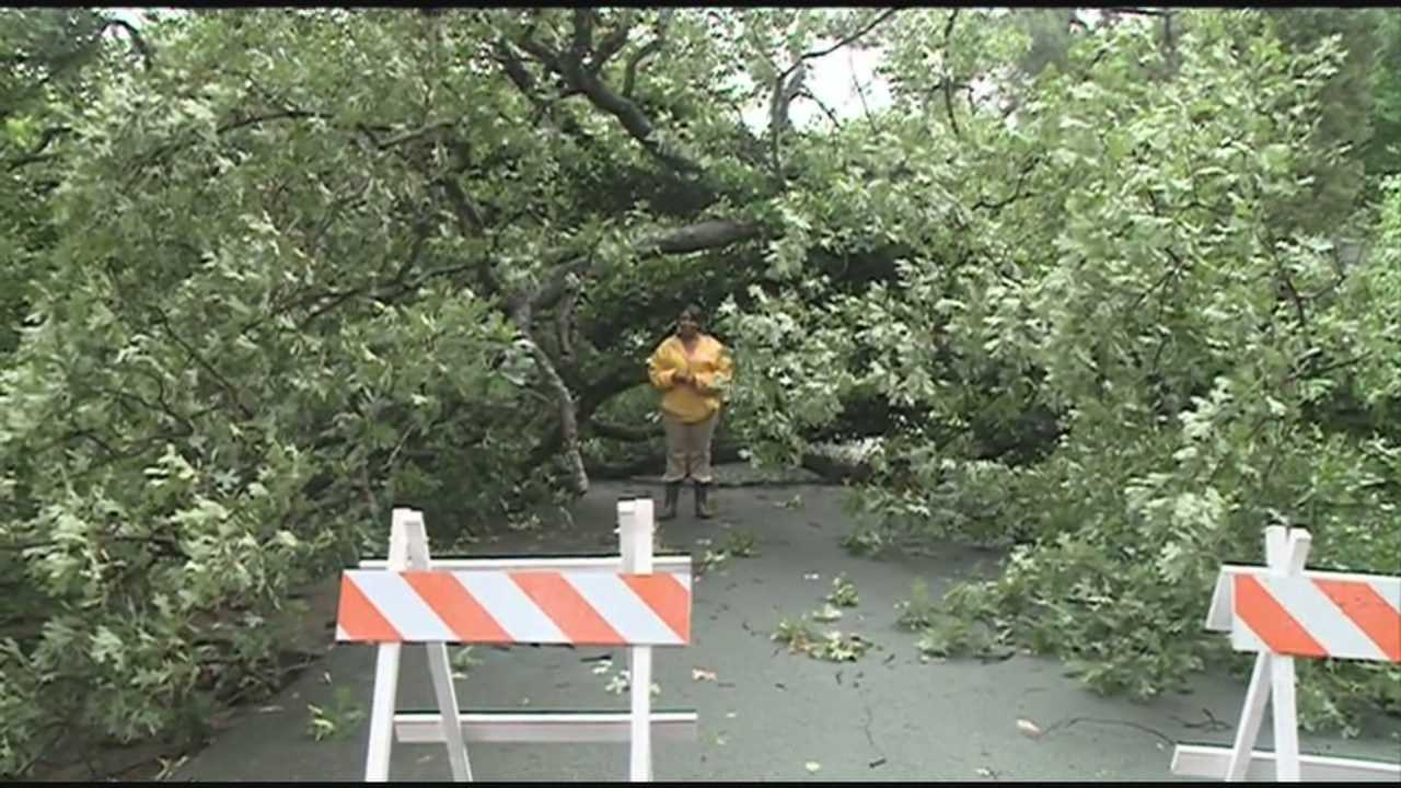 Heavy rain and strong winds downed trees in Fort Smith Saturday night.