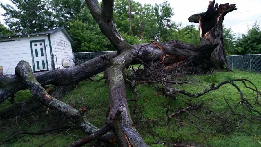 Tree down in Van Buren from weekend storms.
