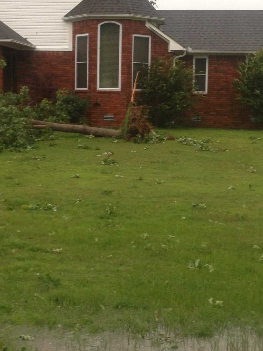 ABM Addition uprooted tree Poteau.