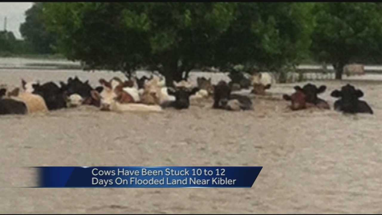 A rancher deals with the aftermath of flooding on his farm.