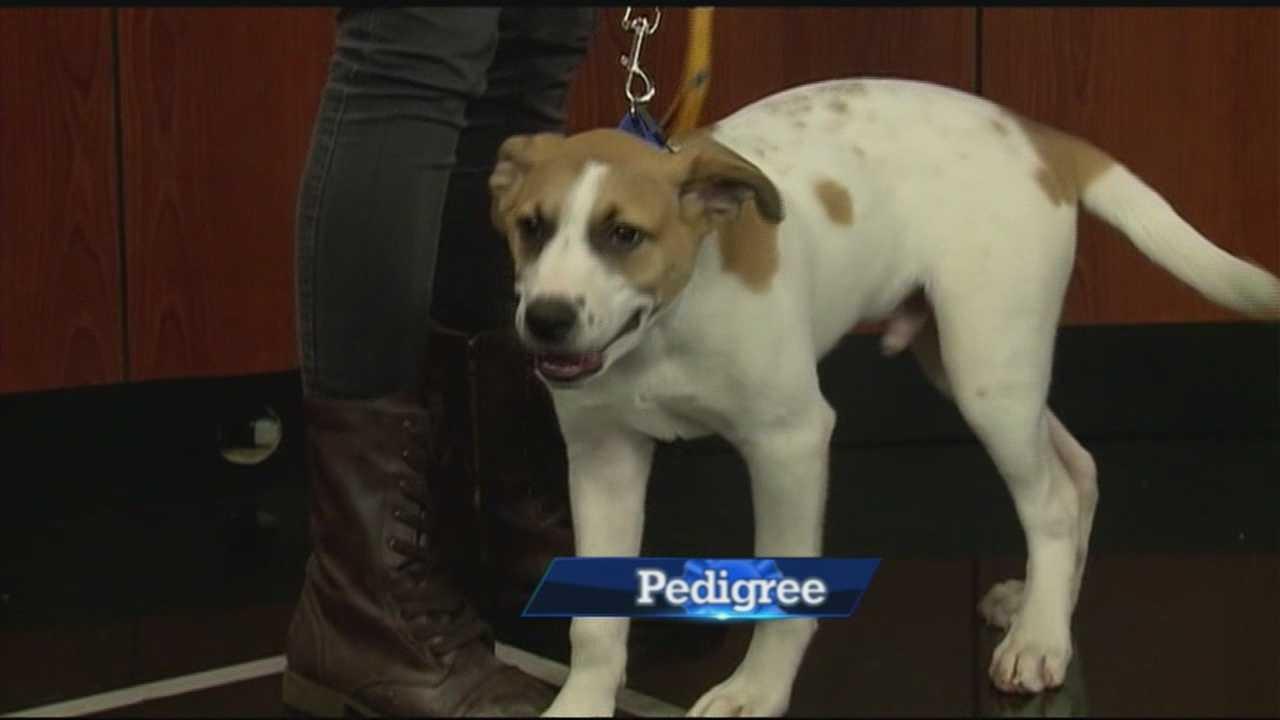 Pets on Set: Meet Dudley