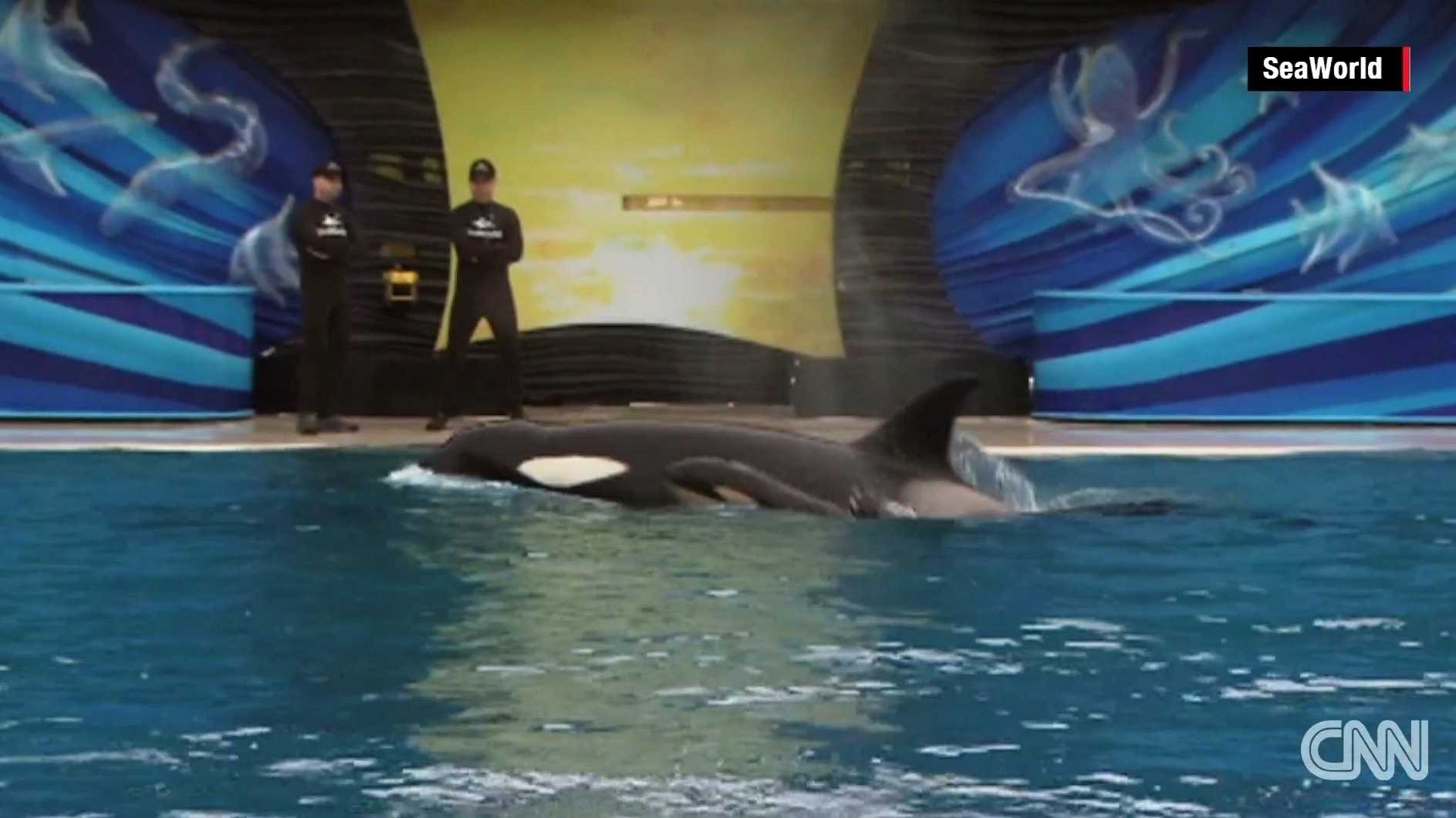 Sea World Orca CNN