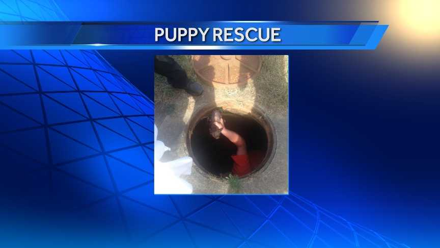 A puppy was rescued from a sewer drainage pipe in Springdale on Wednesday.