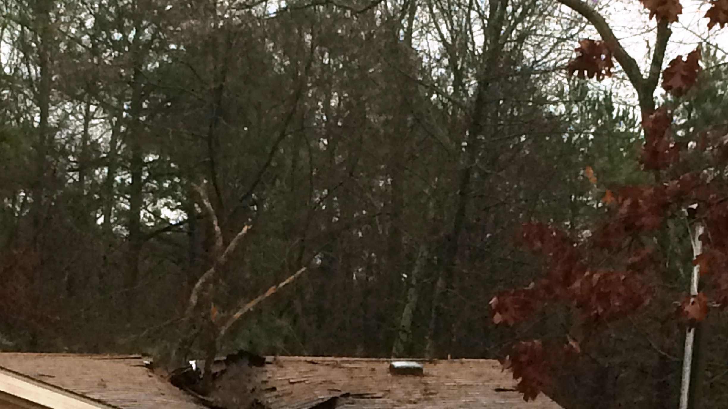 Woman killed after tree falls onto home