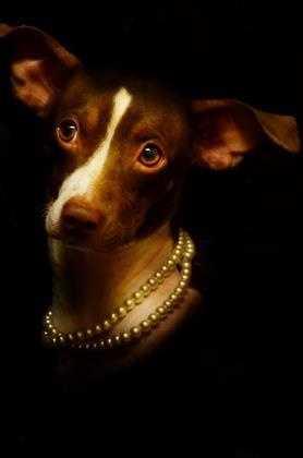 Terrier Mix • Adult • Female • Smallhttps://www.petfinder.com/petdetail/34246589