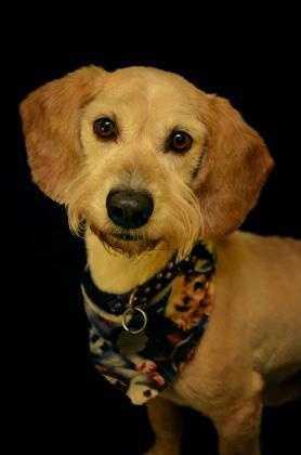 Terrier Mix • Adult • Male • Mediumhttps://www.petfinder.com/petdetail/34122517